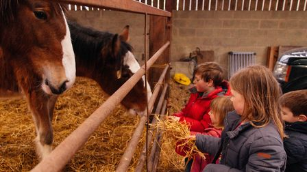 The children learn so much about livestock