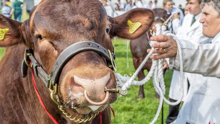 Livestock galore will be on show