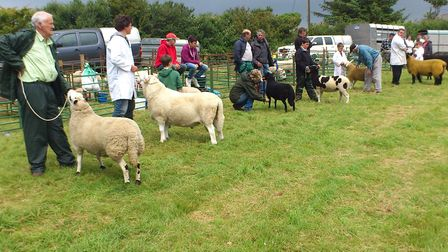 Even at this small local event the wide diversity of breeds is apparent