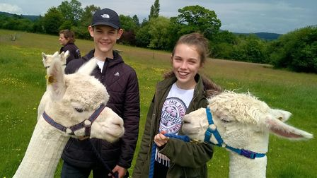 The alpacas are popular with visitors at Wendy's smallholding