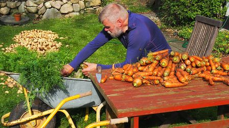 Bo with the carrot harvest