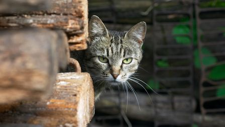You will still need to feed a feral cat (photo: Getty Images)