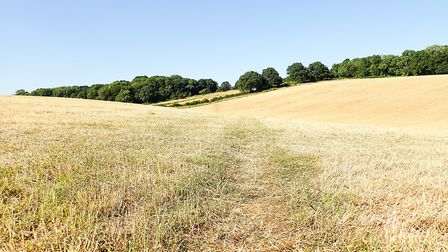 Usually lush fields are being scorched this summer (photo: Getty Images)
