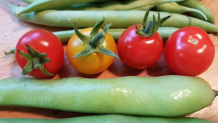 Picking tomatoes, cucumbers and chillies leads to further growth
