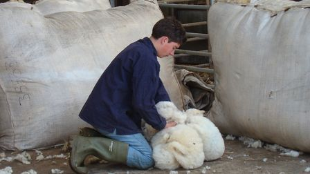 Fleeces are rolled and packed into sheets (photo: Tim Tyne)