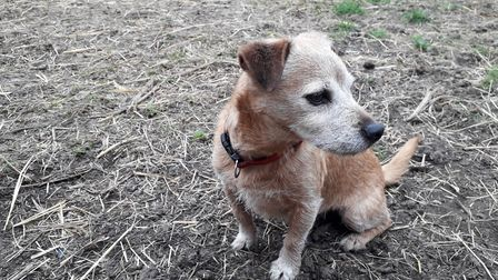 This small dog has a great instinct for which animals belong on the smallholding and which don't