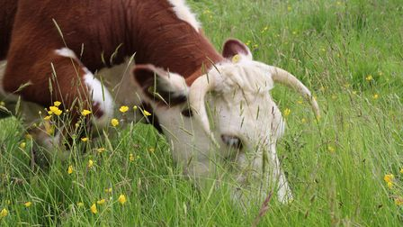 With phytonutrients creating a myriad of flavours in aplant, when eaten by a cow they add depth and