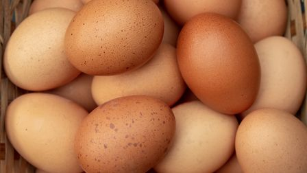 A hen called Lady McDuff was the first to be recorded as laying more than 300 eggs in a single year