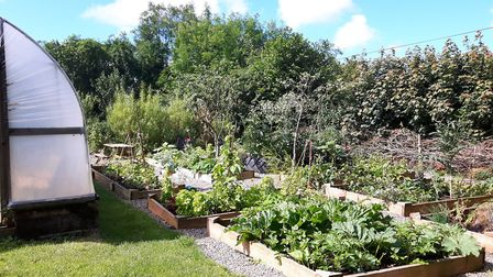 Kim's more climate change-proof veg patch and gardens