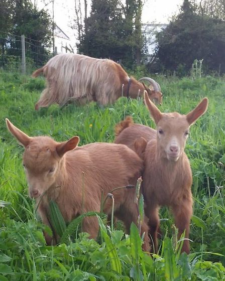 If you are buying goats to set up a business, research other 'goaty' companies in the area