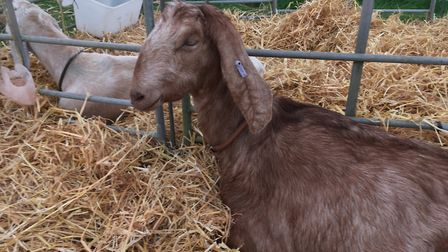 Any goatkeeper visiting a show must have filled in a movement form