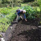 Charles planting out winter salads and herbs in September (photo: Charles Dowding)