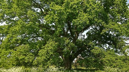 Trees help to provide essential shade in summer and valuable shelter from the wind, plus they slow w