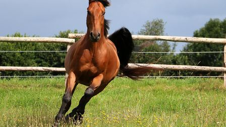 Mollichaff Original is great for strong bones and healthy growth in horses. Photo credit: BiancaGrue