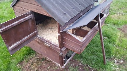 INvest in a solid construction for your chicken coop - buying cheap. flimsy materials is false econo