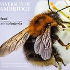 The University of Cambridge online event discusses the future of bees with a panel of experts