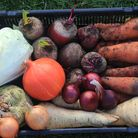 Charle's winter veg store in February Credit: Charles Dowding