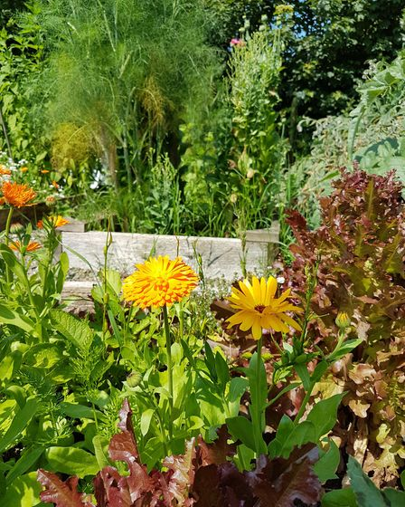 Flowers can also be grown mixed into your fruit and veg for a colourful cottage garden feel