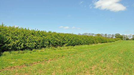 A hedge and brood-rearing strip at The Allerton Project