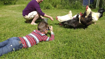 Seven year old Enzo Barel getting down to the chicken's level to take a photo