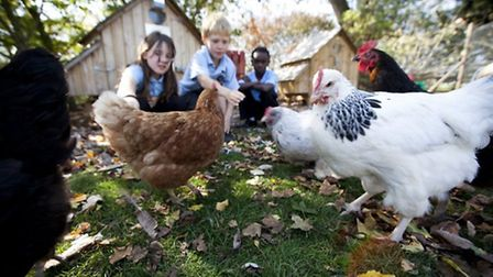 The children are learning so much from the hens
