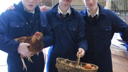 All students are involved in looking after the chickens