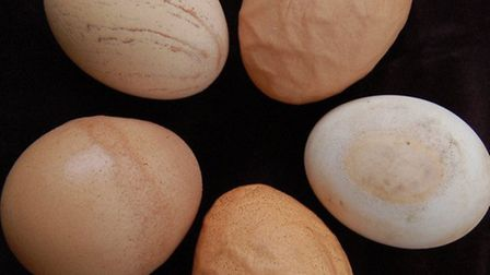 What causes egg oddities?