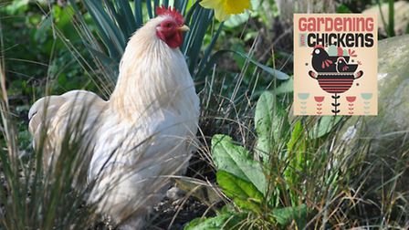Can chickens and gardening mix?