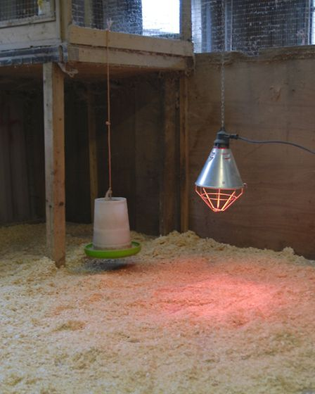 A heat lamp - but these can create a fire risk and be expensive to run