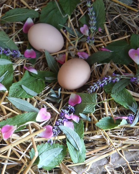 Fresh highly aromatic herbs will help calm your laying hens.