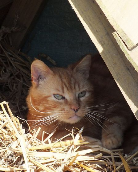 Ginger is at home in the coop