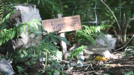 Ferns have been planted around Tiger's grave.