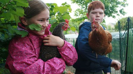 The chickens get a lot of affection
