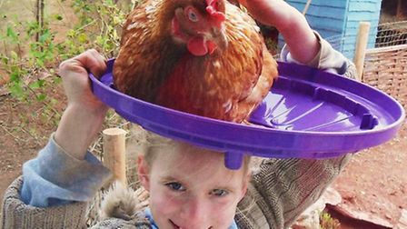 Heading for a milestone- 10 years of rescuing ex- battery hens`
