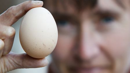 When will you find the first egg in the nest box?