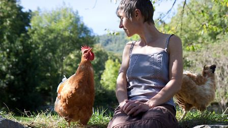 Animals, including chickens, share a common language with us - telepathy.
