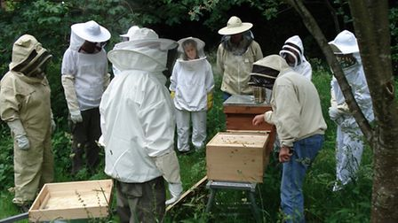Learning all about bees