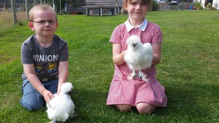 Evie and Harry with non-beared and beared Silkies