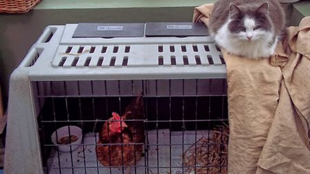 'Enry Cooper the cat with Celine Dion in the crate