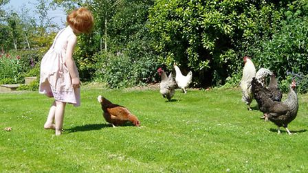 Some chickens are friendlier than others!