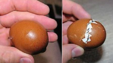 A pipping egg and a hatching egg
