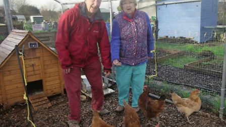 Liz Mills with her husband Neville and their chickens in the cage they erected on their allotment in