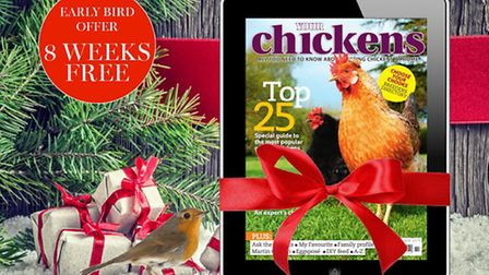 Treat yourself to a digital subscription of Your Chickens!