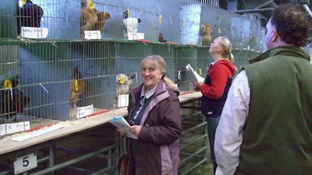 Checking birds at an auction