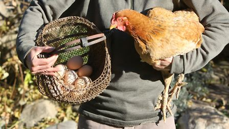 Having your own hens should mean that your eggs are fresher and more nutritious than those available
