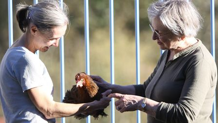 My chicken-loving neighbour, Genevieve, has an affinity for my flock (Julie Moore)