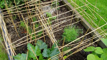 Barriers can protect young seedlings from your chickens.