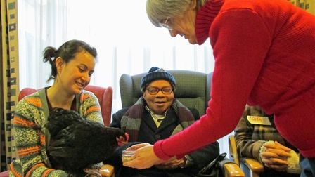 Furry Tales - Ione takes chickens to Age UK sheltered housing residents (photo: Remi Bumstead)
