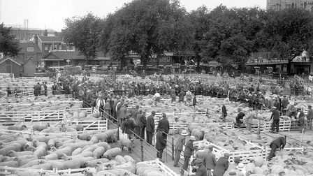 Norwich Cattle Market sheep sale (note City hall under construction in background). Dated: mid 1930s?