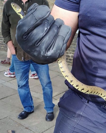 Snake rescued in Ely after concerned resident flagged down a localfire crew.